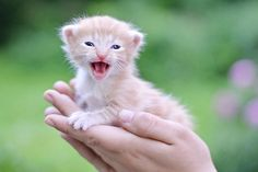 Tiny Kitten, Little Kittens, Homeless People, Helping The Homeless, Animal Photography, Cute Animals, Fitness, Palm, Photos