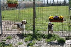 Howie and Heidi posing near the posies! / Howie e Heidi in posa vicino ai fiori!