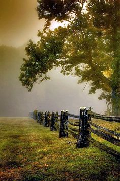 Foggy morning along the Blue Ridge Parkway