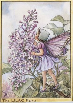 Lilac Fairy from Flower Fairies of the Trees. Cicely Mary Barker, 1940