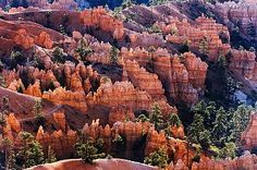 Hoodoos in Bryce Amphitheater, USA
