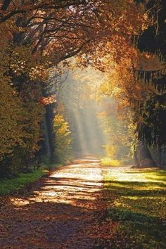 Beautiful path Jülich, FranceAndrea Fettweis The post Beautiful path Jülich, FranceAndrea Fettweis autumn scenery appeared first on Trendy. Beautiful World, Beautiful Places, Beautiful Pictures, Landscape Photography, Nature Photography, Autumn Scenery, Autumn Nature, Autumn Leaves, Beautiful Landscapes