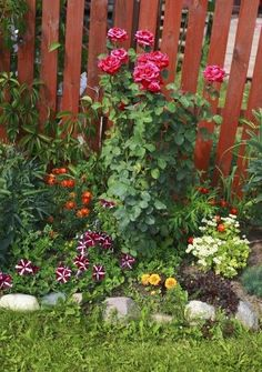 Underplanting Rose Companions – Suggestions For Plants That Grow Well Under…