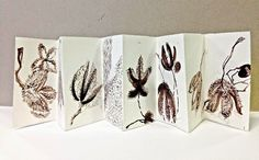 Small Things Scientist -- concertina book (sophie munns)