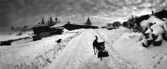 Pentti Sammallahti, White Sea, Russia,   Dog With Bag, 1992