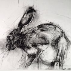 "This drawing by the amazing will be in ""Barely Imagined Beings"", a show I'm curating with at Proto Gallery, Hoboken. It opens April please stop by if you're in the area. Hare Pictures, Rabbit Pictures, Hare Illustration, Illustrations, Animal Drawings, Art Drawings, Rabbit Art, Rabbit Hole, Etching Prints"