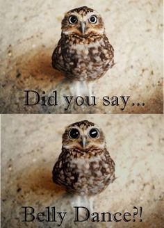 Exactly what happens to my eyes when I hear 'belly dance'.