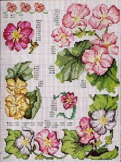 Primula or Primroses chart