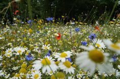 Think it's too late to plant a wildflower meadow? Think again! If you sow your wildflower seeds now, then come next summer you should have yourself a rather marvellous meadow #homesfornature