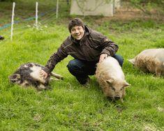 Das schweinische Wochenende: Package für echte Tierfreunde Mini Bars, Animals, Cuddle, Animales, Animaux, Animal, Animais