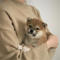 Cute Baby Animals Try Not To Aww inside Puppies Near Me these Baby Animals Pictures To Draw over Kittens Game Oil Production Cute Baby Animals, Animals And Pets, Funny Animals, Funny Dogs, Cute Puppies, Dogs And Puppies, Doggies, Corgi Puppies, Photos Of Cute Babies