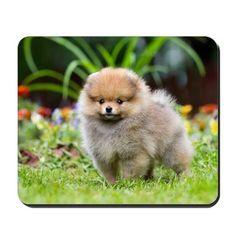 Little Fluffy Pomeranian Puppy Mousepad on CafePress.com
