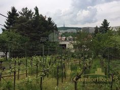 Fotka #1: PREDAJ 6 izbového RODINNÉHO DOMU V HORSKOM PARKU NA POZEMKU S VÝMEROU 1061 M2 Vineyard, Outdoor, Outdoors, Vine Yard, Vineyard Vines, Outdoor Games, The Great Outdoors