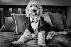 The perfect model | Brian Maloney Photography #wedding #pets