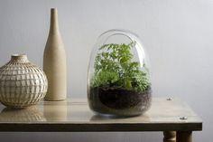 kaffeekanne mini terrarium oval