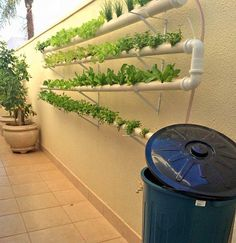 Aquaponics - My Backyard ideas Hydroponics System, Hydroponic Gardening, Container Gardening, Vertikal Garden, Aquaponics Fish, Urban Farming, Growing Vegetables, Garden Projects, Vegetable Garden