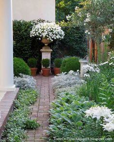 nice focal point Tone on Tone: Petunias in the urn with potted English boxwoods - Oleander tree (top right) - Daisies, Phlox and Lilies (middle to bottom right