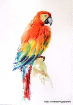 Hey, I found this really awesome Etsy listing at https://www.etsy.com/listing/227670257/parrot-bird-painting-bird-watercolor