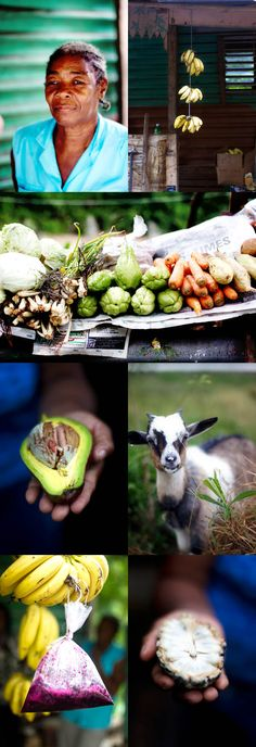 The wonders of Jamaica | La Tartine Gourmande