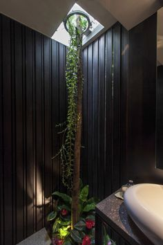 In the dramatically dark bathroom scheme, a surprisingly situated slender tree trunk breaks through the ceiling in search of natural sunligh...
