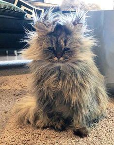 someone's havin' a bad hair day!