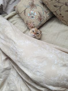 being me..., myomyoinshiga: ぼく、寝ますにゃ。
