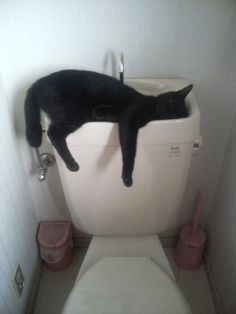 Cats!?!!? I cannot say it enough.....cats will sleep ANYWHERE!!!