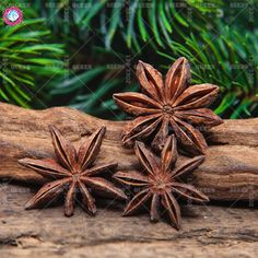 Star Anise Tree Fennel Branch Chinese Kitchen Cooking Seasoning Spices Illicium Verum Hook Herbal Medicine Value. Category: Home & Garden. Wicca, Magick, Star Anise, Witch House, Diy Spa, Star Wars, Diy Arts And Crafts, Coven, Garden Supplies