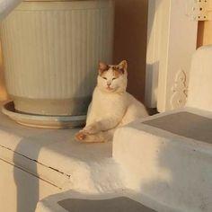 𝘱𝘪𝘯𝘵𝘦𝘳𝘦𝘴𝘵 ⌲ 𝘦𝘱𝘪𝘭𝘰𝘨𝘦 Animals And Pets, Baby Animals, Cute Animals, Cute Creatures, Beautiful Creatures, Crazy Cat Lady, Crazy Cats, Cat Aesthetic, Doja Cat