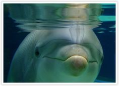 a dolphin's face always looks like it is smiling :)