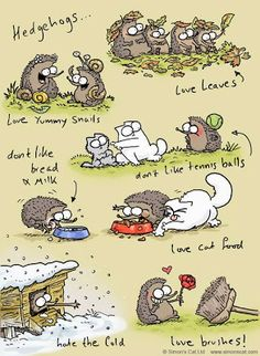 It's funny cause it's true my hedgehog kiss loves cat food and hates tennis balls but she does love bread! Love her!