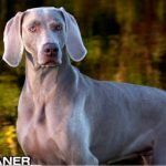 Who Are The 10 Fastest Dog Breeds?  Dogs are friendly, they are protective. But, do you know they are also capable of displaying incredible speed. Some dogs are capable of racing so fast that they are used by the police to catch thieves and runaway criminals. The …  [CLICK TO READ MORE]   The post  Who Are The 10 Fastest Dog Breeds?  appeared first on   .  https://www.dogisto.com/10-fastest-dog-breeds/
