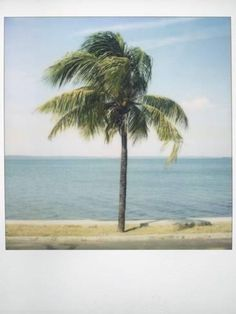 Photographic Print: Polaroid of Single Palm Tree with Caribbean Sea in Background, Cienfuegos, Cuba, West Indies by Lee Frost : 24x18in