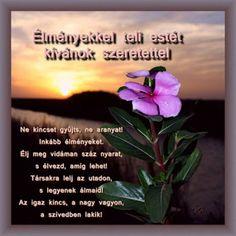 Osztva About Me Blog, Morning Wish, Good Night, Plants, Google, Nighty Night, Plant, Good Night Wishes, Planets