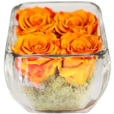 I pinned this Preserved Rose Arrangement in Orange from the Faux Florals Under $100 event at Joss and Main!
