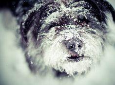 Snowy doggie