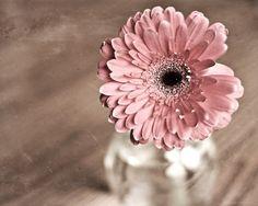 Pink flower light brown peach romantic gerbera daisy spring summer photograph - Gerber Daisy 2 - Fine Art Photography Print