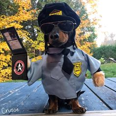 """Crusoe the celebrity dachshund """"Uh oh! Friday night and look who's at your door! Tell me what sorta trouble you've been up to! Dachshund Costume, Dachshund Funny, Dachshund Puppies, Cute Dogs And Puppies, Funny Dogs, Daschund, Funny Animal Pictures, Cute Funny Animals, Cute Baby Animals"""