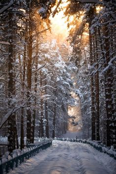 Wistfully Country: Photo, curvy road, sunbeams, trees, beauty of Nature, Winter, snow, peaceful, on the road again, photo