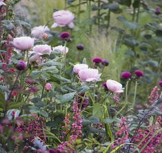 40 inspirations pour un jardin anglais Pink roses purple thistles dark-leaved Actea and Heuchera with variegated grasses. The post 40 inspirations pour un jardin anglais appeared first on Garten. Beautiful Gardens, Beautiful Flowers, Heuchera, Garden Cottage, Prairie Garden, Shabby Chic Garden, Different Flowers, Colorful Garden, Tropical Garden