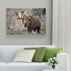 "Every size Moose In Snow  canvas print now 50% OFF. Check them out http://ift.tt/2z2WLlp Please like and share this awesome deal! ""	#mountainlife #bowhunt #bigbucks #animalsco #igcutest_animals #animaladdicts #outdoorfun #outdoorphotography #outdoorliving #outdooradventurephotos #mountainview #takeahike #outdoorlovers #mountainlove #outdoors #animallover #animales #dm_photolife_nature #destinationearth #getoutside #sky_brilliance #ig_countryside #water_brilliance #ig_myshot #wildlife…"