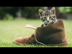 Abraham Hicks ~ What Is Life`s Purpose - YouTube