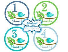 Bird Monthly Onesie Stickers Print at Home Blue Boy Baby Shower New Baby Printable Digital