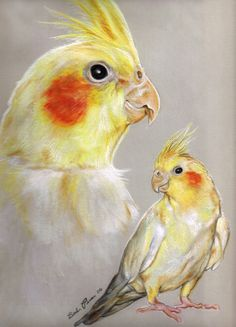 Conrad the Cockatiel by ~properprimart on deviantART Bird Drawings, Animal Drawings, Animal Paintings, African Grey Parrot, Acrylic Painting Lessons, Australian Birds, Color Pencil Art, Animal Sketches, Watercolor Bird