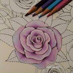 #birdtopia #daisyfletcher #adultcoloringbook #colorpencil #carand'ache #inprogress