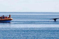 El avistaje de ballenas se incrementó casi un 10% http://www.ambitosur.com.ar/el-avistaje-de-ballenas-se-incremento-casi-un-10/ El dato lo reveló el secretario de Turismo y Áreas Protegidas del Chubut, Carlos Zonza Nigro. Surge en comparación con el mismo fin de semana de 2013. El promedio de ocupación para la zona de la Cordillera fue del 80 por ciento, mientras que en la Costa rondó el 70