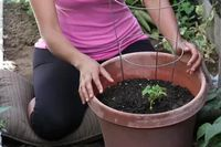 How to Grow Zucchini in Pots | eHow
