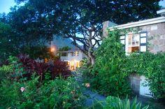 LUSH! #Nevis #Caribbean via @Montpelier Plantation and Beach
