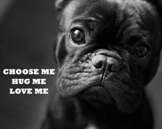 'I love the eyes..I choose you, will hug you all day long, and I'll love you forever!!!!' French Bulldog Puppy.