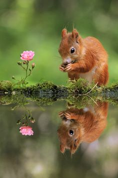 """"""" Squirrel and Rose by JulianRad """""""